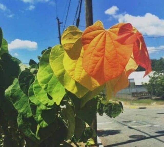разноцветные листья