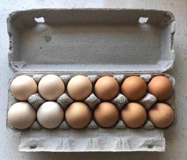 лоток с яйцами