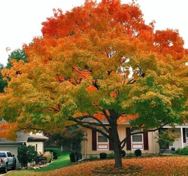 цветастое дерево