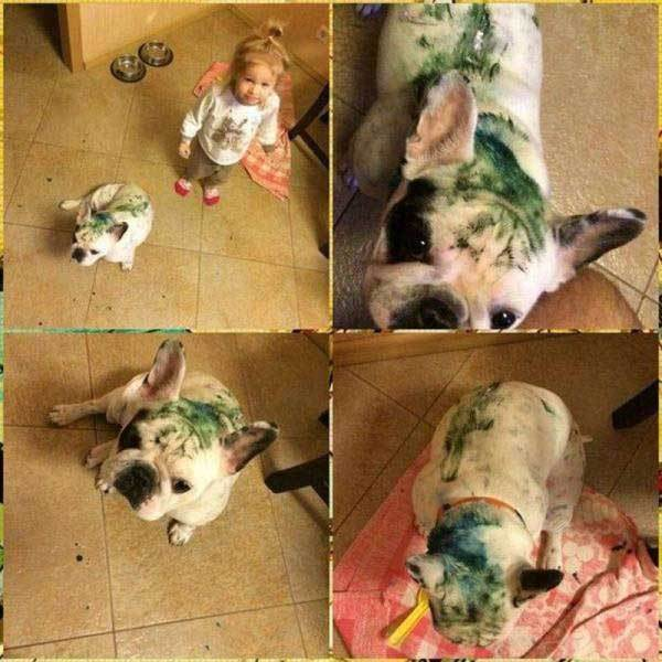 собака в зеленой краске