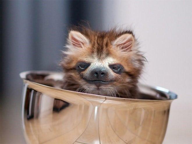 котенок сидит в миске