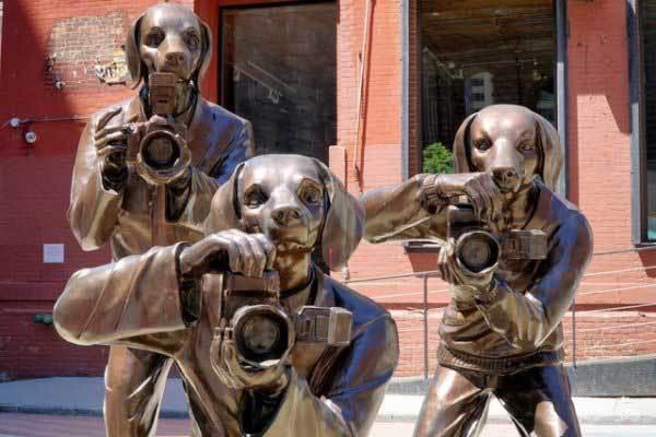 памятник собакам с фотоаппаратами
