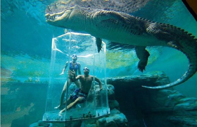 люди в аквариуме с крокодилом