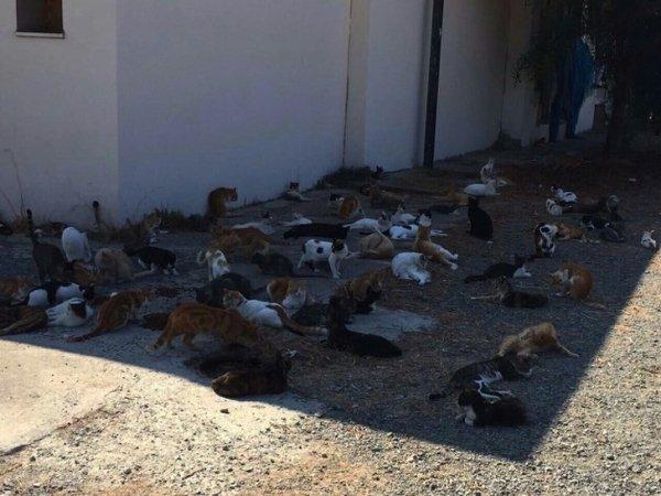 коты спят в тени