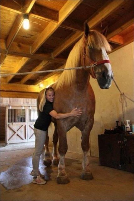 конь и девушка обнимаются
