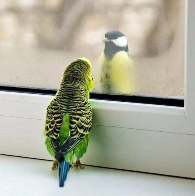 попугай и синица