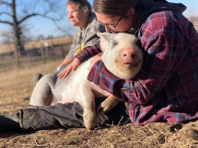 девушка и свинья
