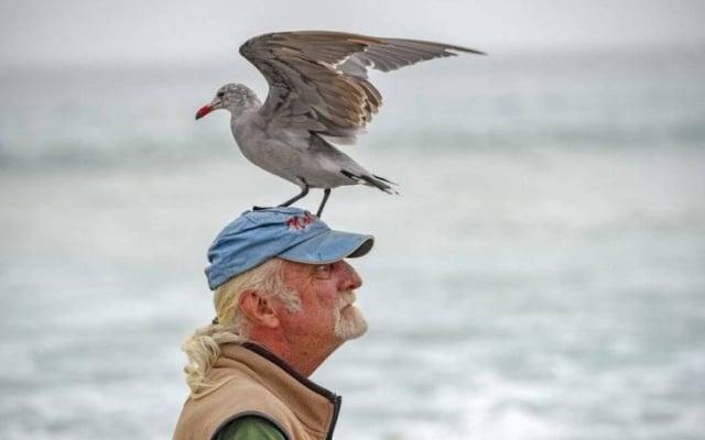 чайка сидит на голове у мужчины