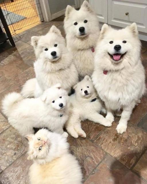собачья семья и кот