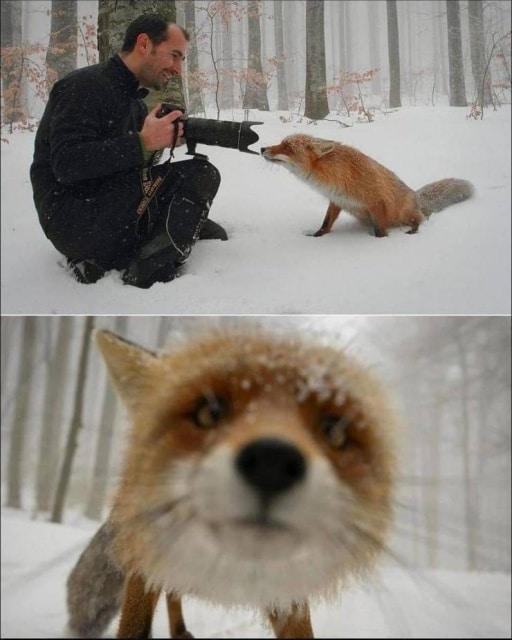 фотограф и лисица