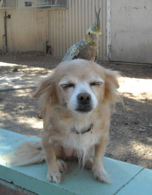 пес и попугай