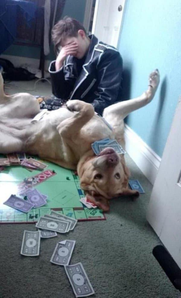 собака с картами в зубах