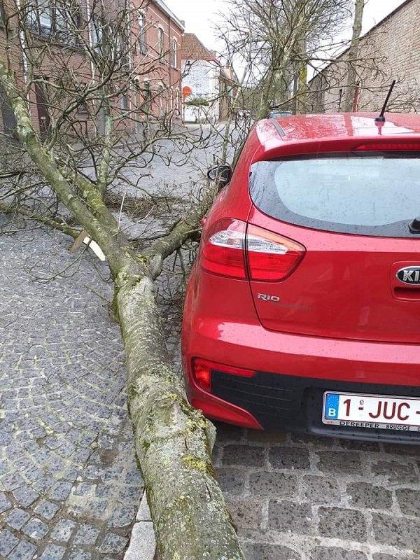 дерево упало рядом с машиной
