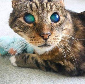 полосатый слепой кот