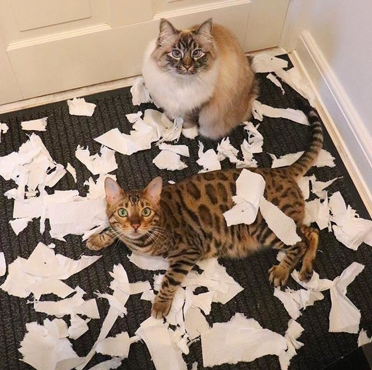коты в коридоре с разорванной бумагой