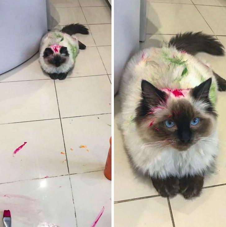 кошка в краске