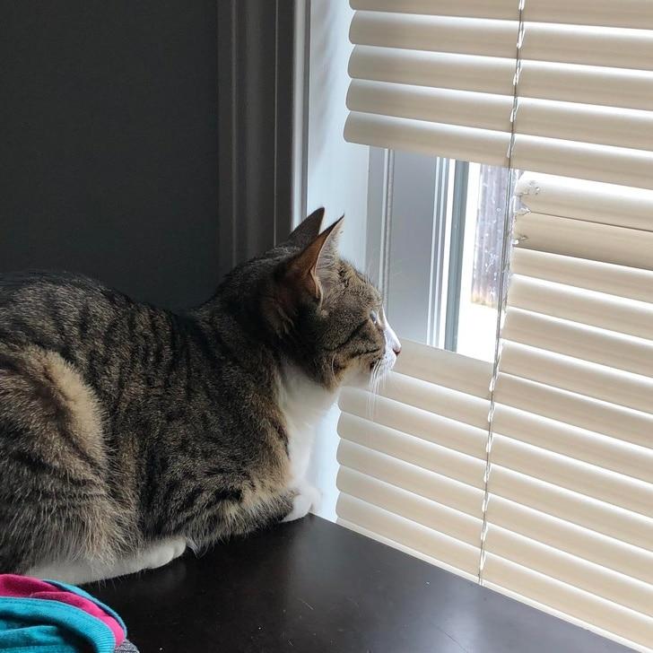 полосатый кот смотрит в окно
