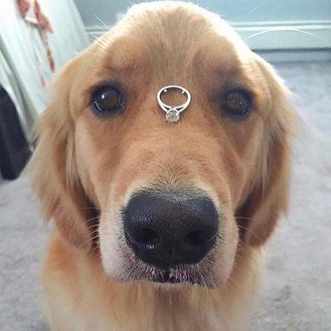 пес с кольцом