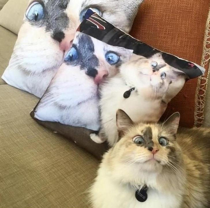 косоглазый кот рядом с подушками с его изображением