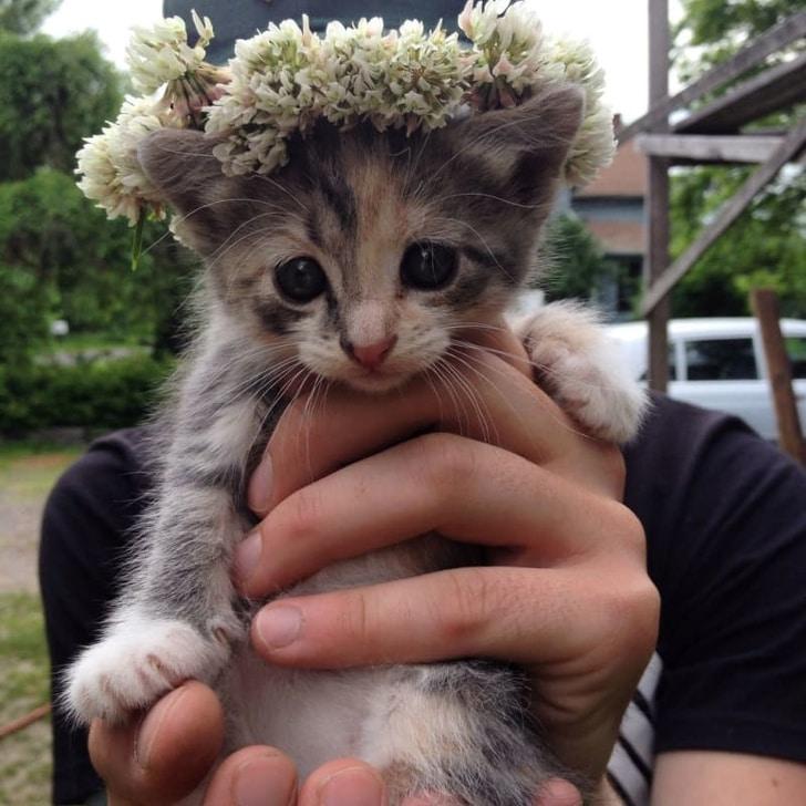 котенок с венком на голове