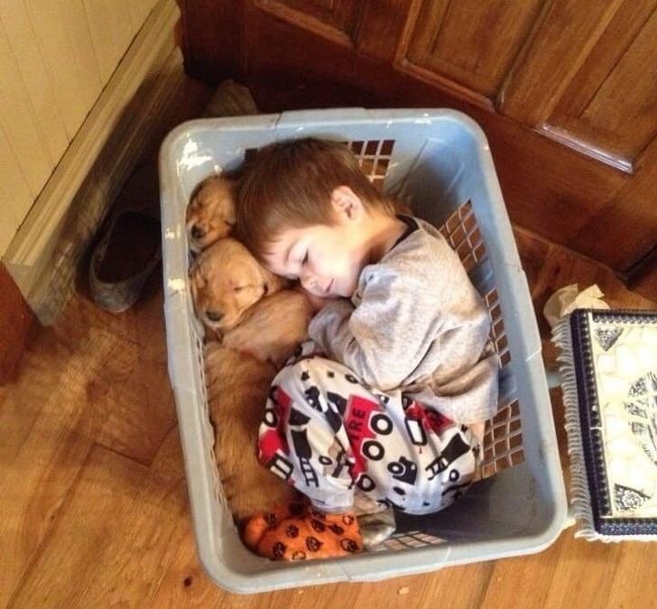 мальчик спит в корзине со щенками