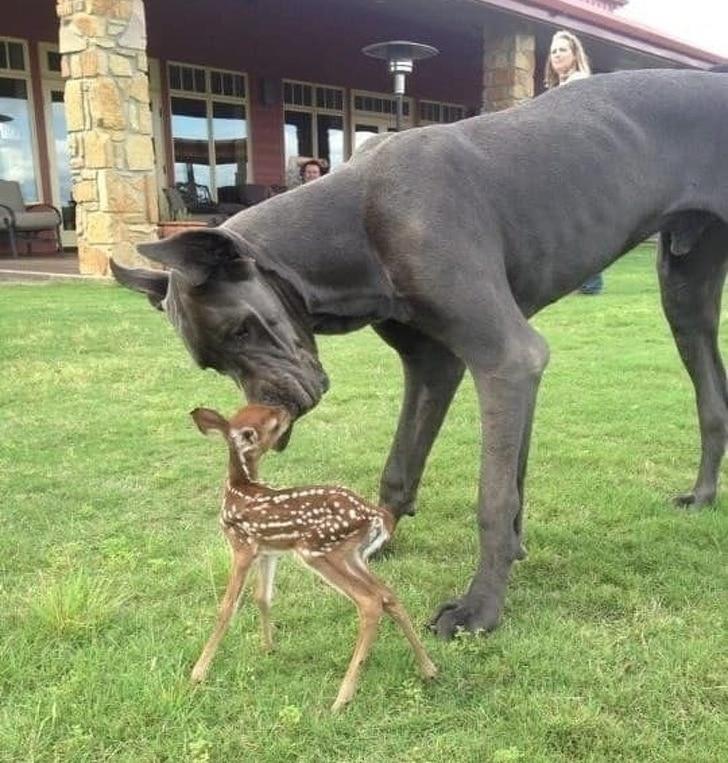 собака и олененок