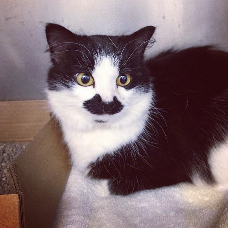 черно-белый кот с черными усами