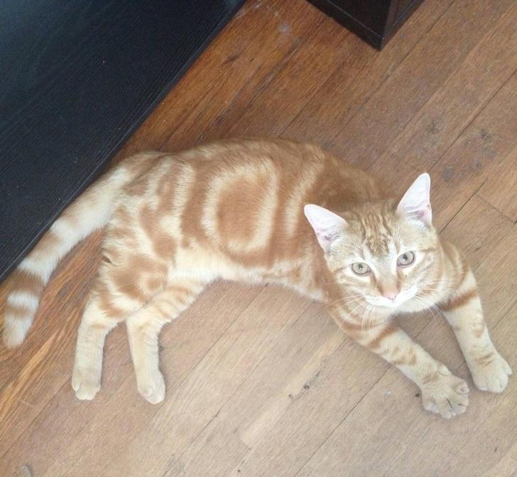 рыжий кот в полоску на полу