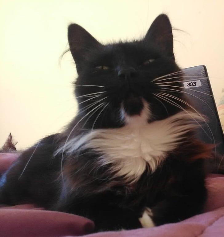 черный кот с белой грудкой