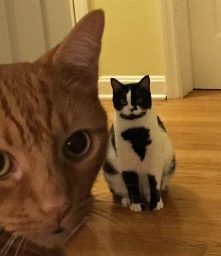рыжий и черно-белый кот