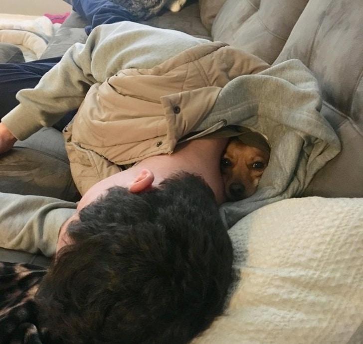 собака сидит за шиворотом у спящего парня