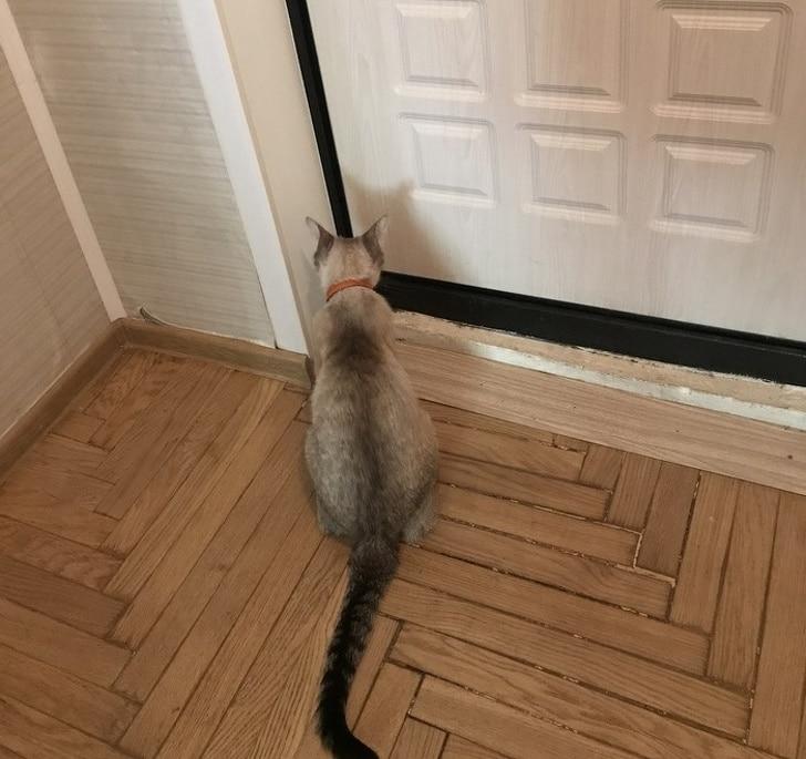 кот сидит у двери