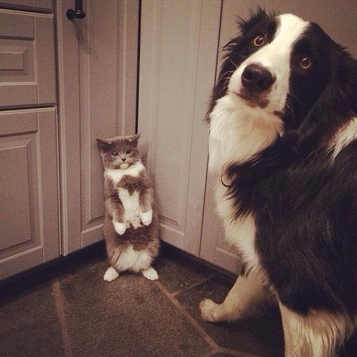 собака и кот в углу