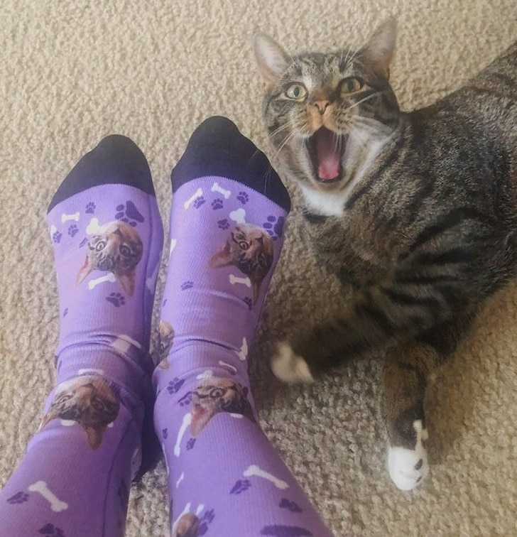 полосатый кот и женские ноги
