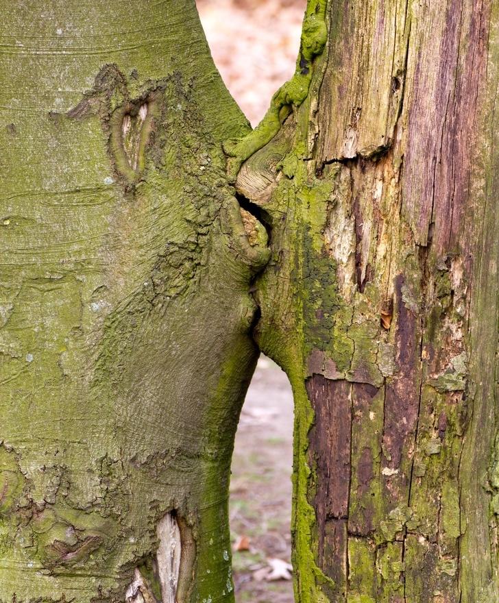 особенное дерево