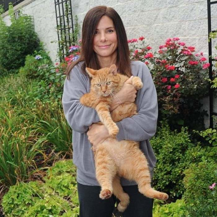 сандра буллок с рыжим котом