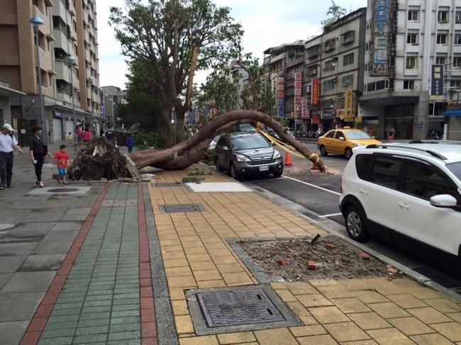 дерево упало рис 2