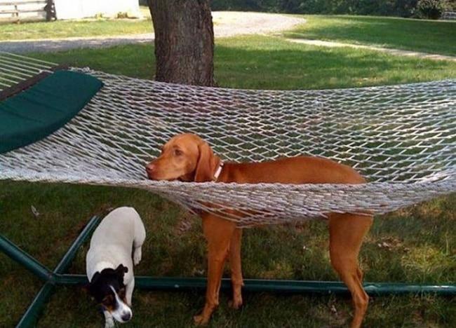 собака и гамак