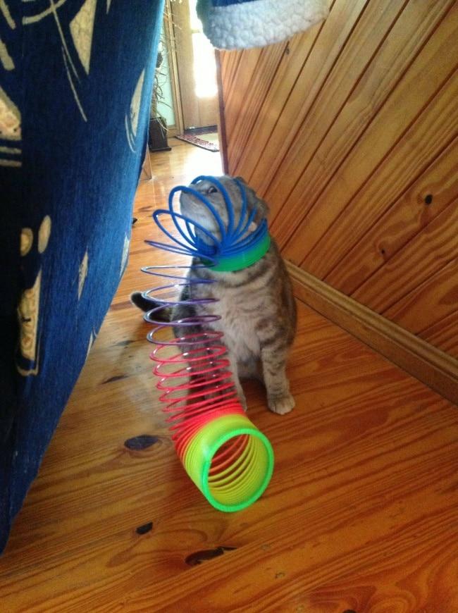 кот и пружина