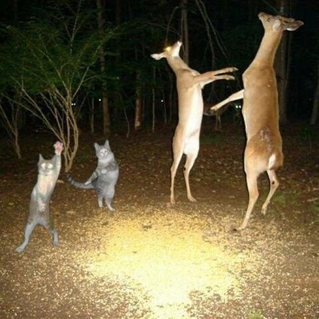 олени и коты