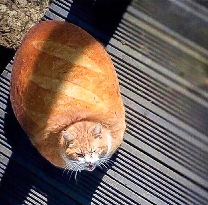 кот хлеб