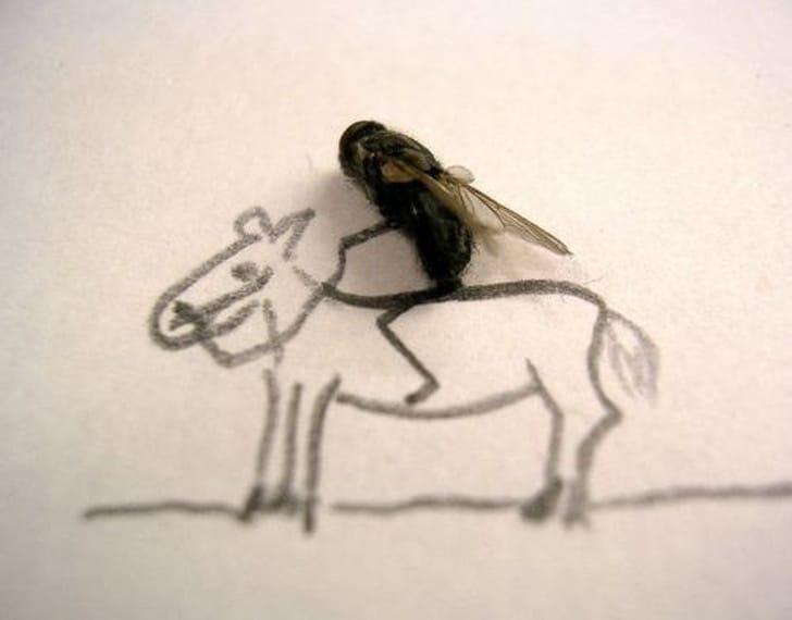 дохлая муха