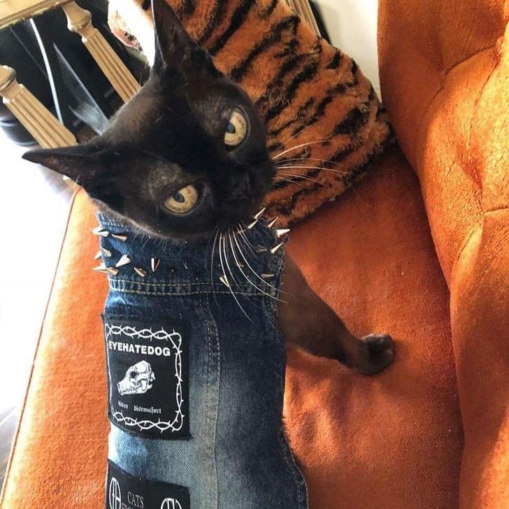 джинсовая желетка