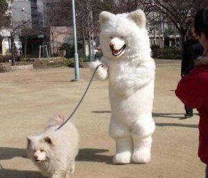 собака выгуливает собаку