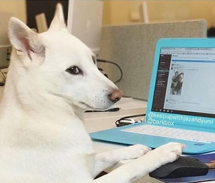 белая собака перед ноутбуком