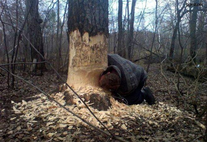 грызть дерево