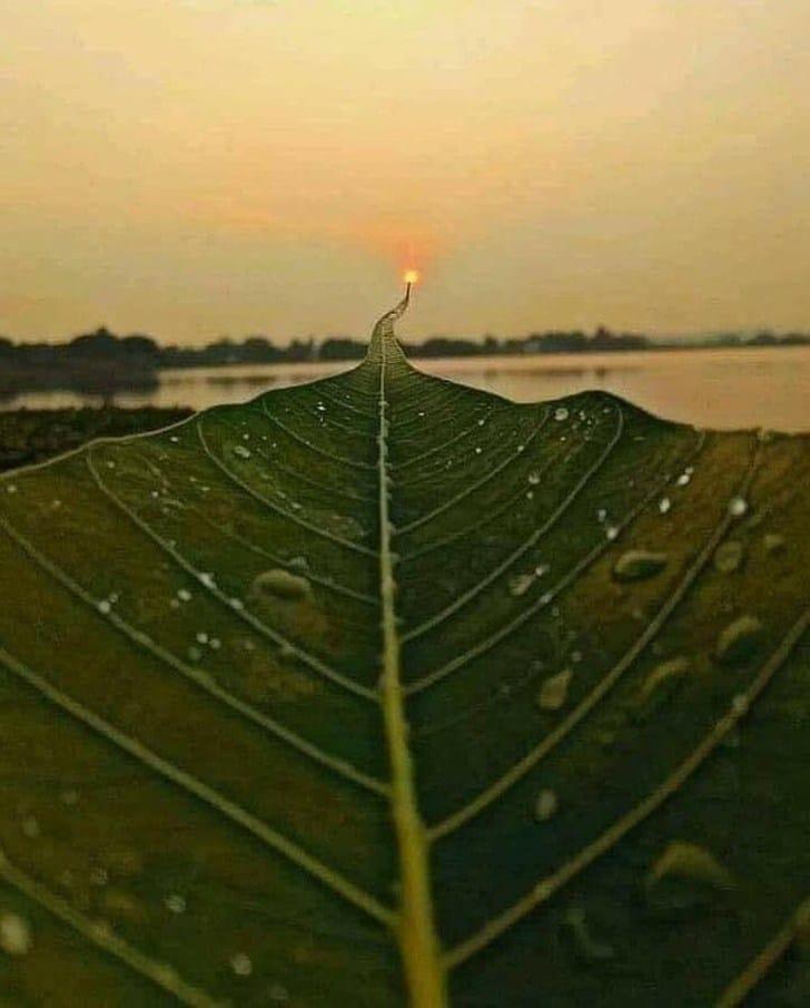 лист и закат