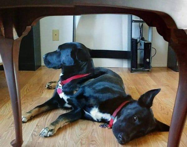 черная собака на полу