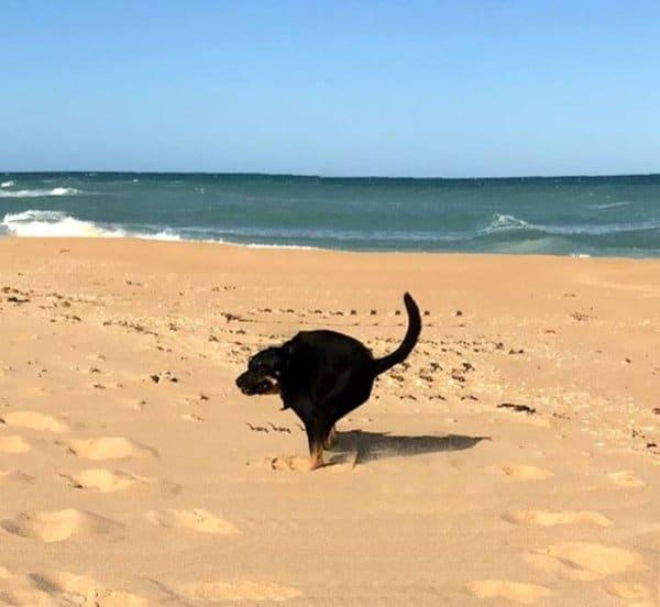 черная собака бежит по пляжу