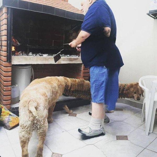собака и хозяин у камина